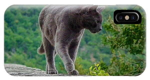Gray Cat Stalking IPhone Case