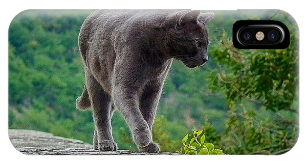 Gray Cat Stalking IPhone Case