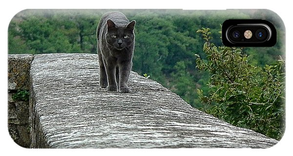 Gray Cat Prowling IPhone Case