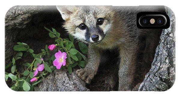 Gray Fox Kit IPhone Case