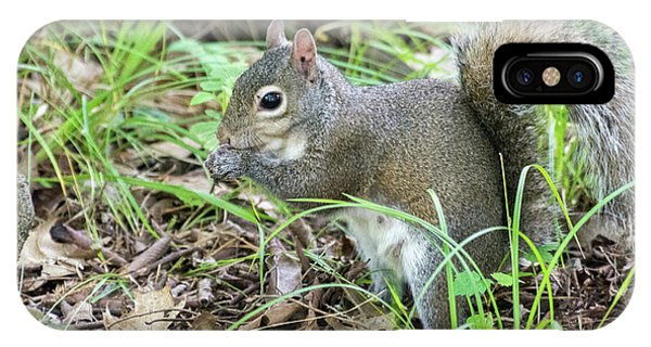 Gray Squirrel Eating IPhone Case