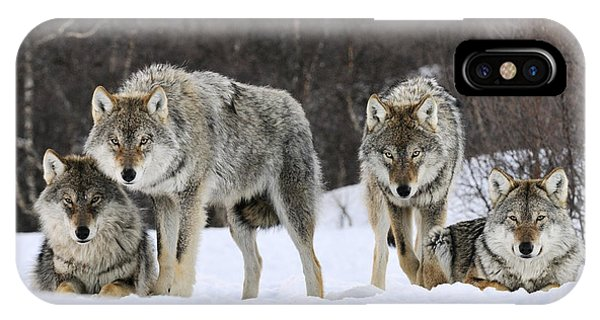 Mp iPhone Case - Gray Wolves Norway by Jasper Doest
