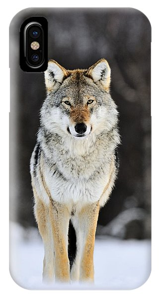 Mp iPhone Case - Gray Wolf In The Snow by Jasper Doest