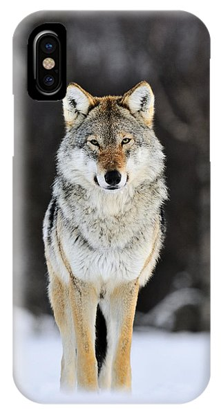 Gray Wolf In The Snow IPhone Case