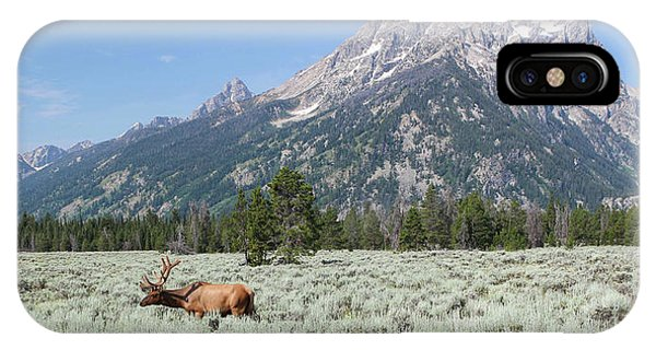 Grazing Elk In Grand Teton National Park IPhone Case