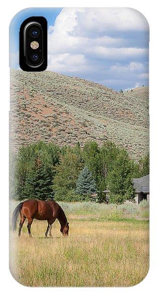 Grazing Horse IPhone Case