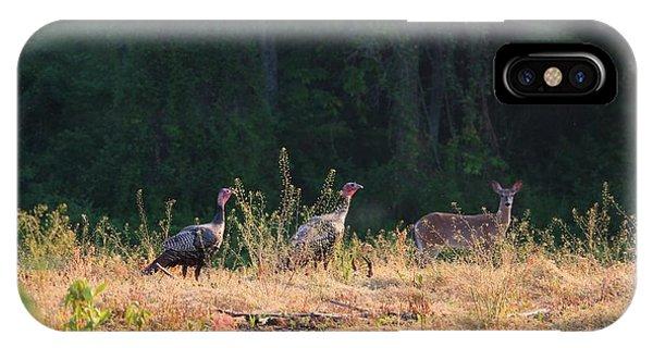 Grazing Turkey And Deer In Pomfret Farm Field  IPhone Case