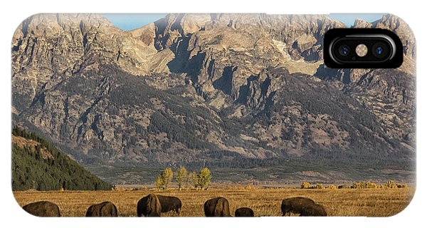 Grazing Under The Tetons Wildlife Art By Kaylyn Franks IPhone Case