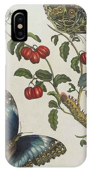 Caterpillar iPhone Case - Great Blue Butterflies And Red Fruits by Maria Sibylla Graff Merian
