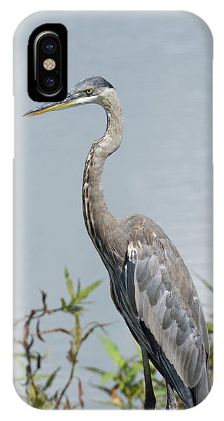 Great Blue Heron #2 IPhone Case