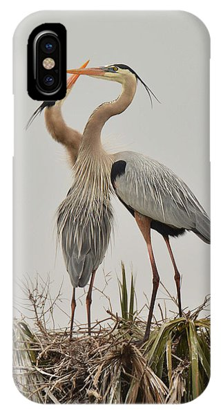 Great Blue Heron Affection IPhone Case