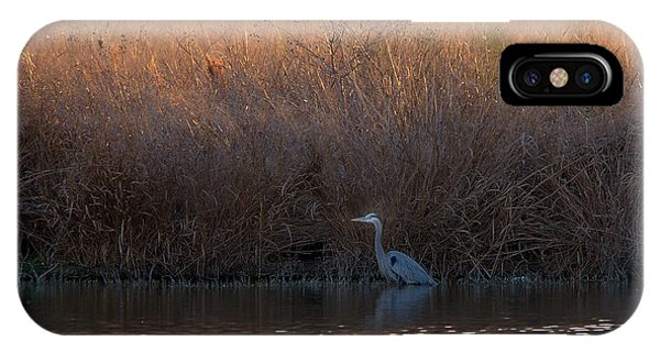 Great Blue Heron And Sunlit Field IPhone Case