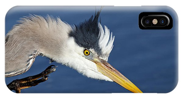 Great Blue Heron - Good Scratch IPhone Case