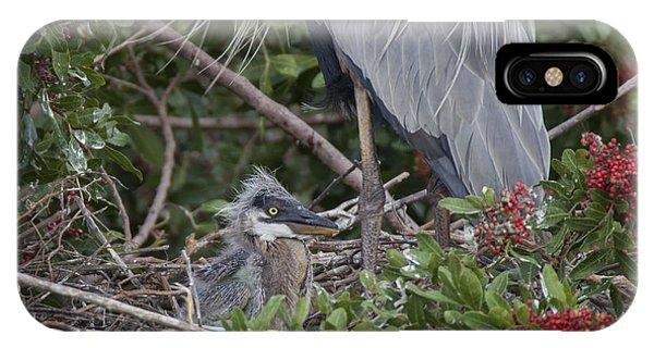 Great Blue Heron Nestling IPhone Case