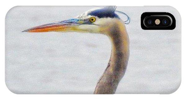 Great Blue Heron Of Virginia IPhone Case