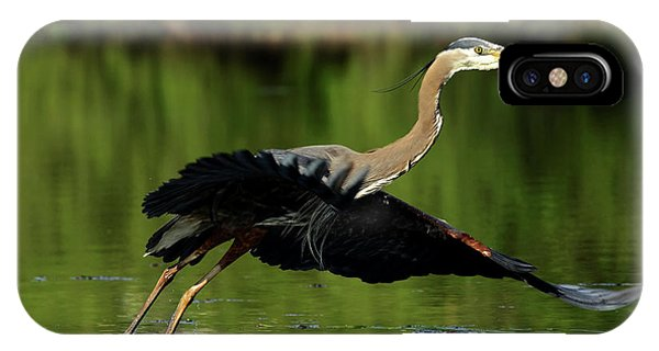 Great Blue Heron - Over Green Waters IPhone Case