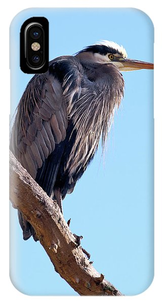Great Blue Heron Perched On Tree Branch Phone Case by Terry Elniski