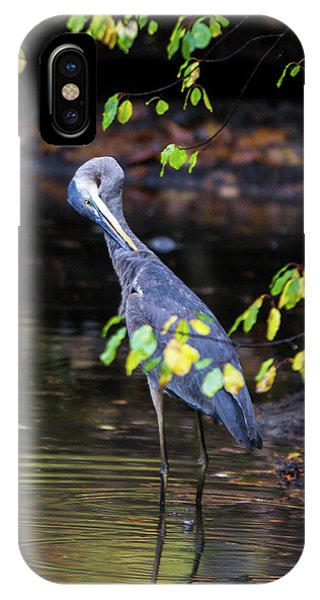 Great Blue Heron With An Itch IPhone Case