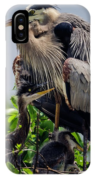 Great Blue Heron With Babies IPhone Case