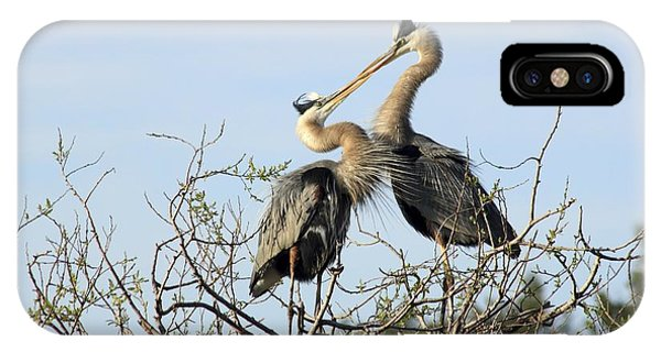 Great-blue Herons On Nest At The Venice Rookery, Florida IPhone Case