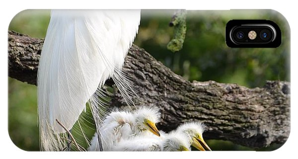 Great Egret Family  IPhone Case