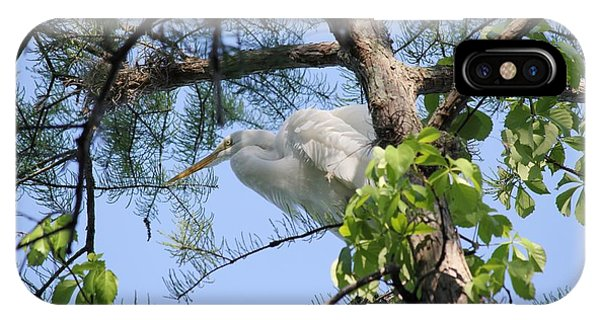Great Egret In Breeding Plumage IPhone Case