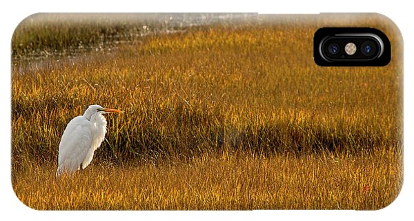 Great Egret In Morning Light IPhone Case