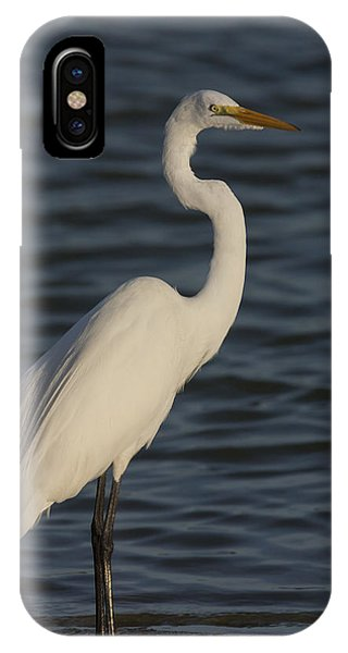 Great Egret In The Last Light Of The Day IPhone Case