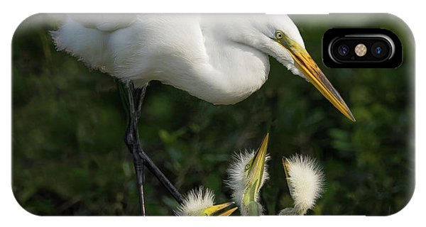 Great Egret With Chicks IPhone Case
