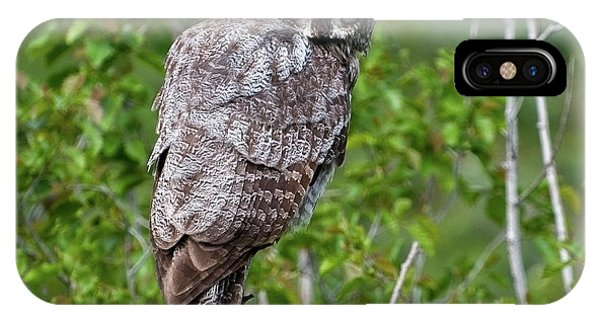 Great Gray Owl #2 IPhone Case