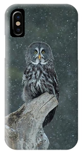 Great Gray Owl In Snowstorm IPhone Case