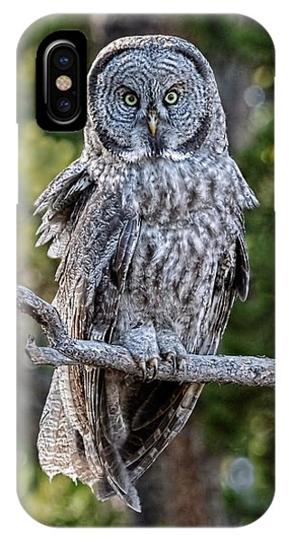 Great Grey Owl Yellowstone IPhone Case