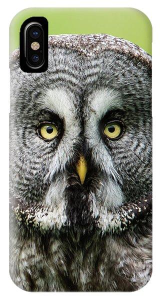Great Grey's Portrait Closeup Square IPhone Case