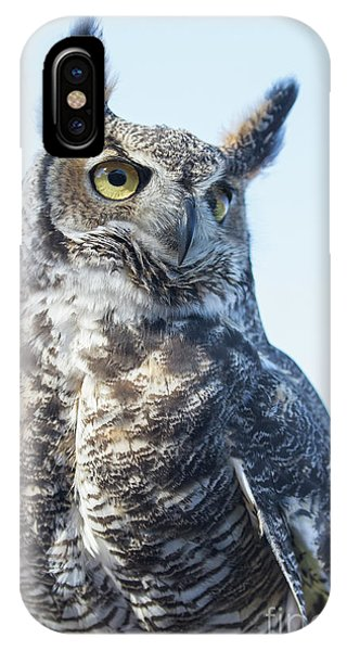 Great Horned Owl 1 IPhone Case