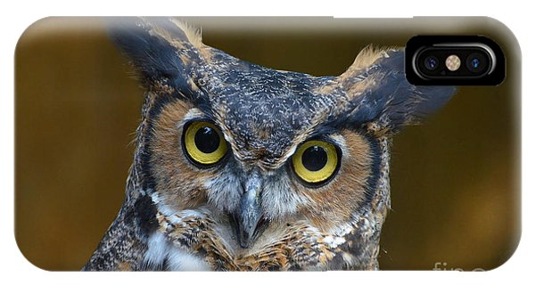 Great Horned Owl Portrait IPhone Case