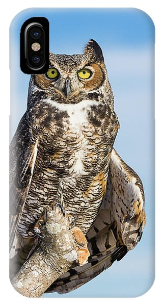Great Horned Owl Portrait - Winged Ambassadors IPhone Case
