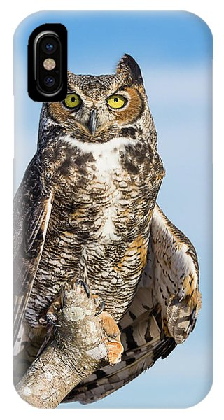 Great Horned Owl Portrait - Winged Ambassadors IPhone Case
