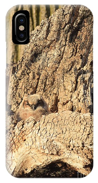 Great Horned Owlet Two IPhone Case