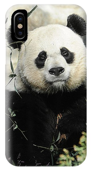 Great Panda II IPhone Case