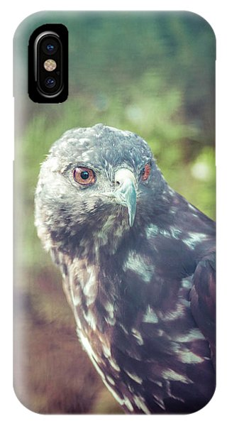 Great Plains Red-tailed Hawk Phone Case by Betsy Armour