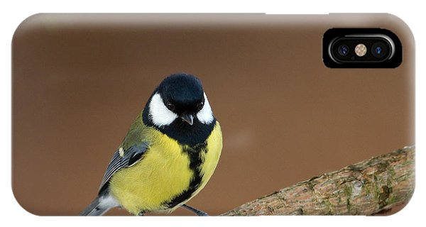 Great Tit IPhone Case