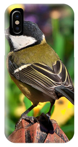 Great Tit British Bird Parus Major IPhone Case