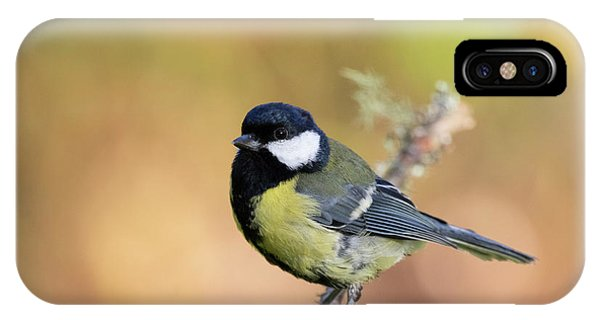 Great Tit - Parus Major IPhone Case
