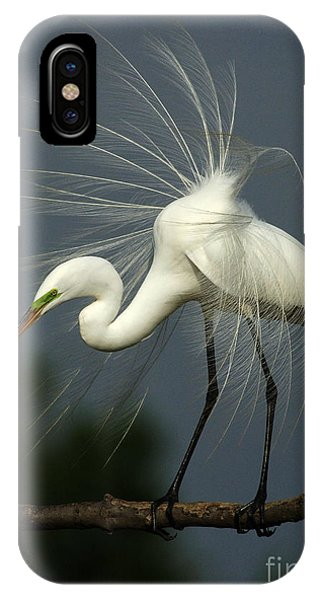 Majestic Great White Egret High Island Texas IPhone Case