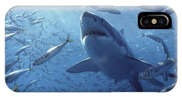 Mango iPhone Case - Great White Shark Carcharodon by Mike Parry