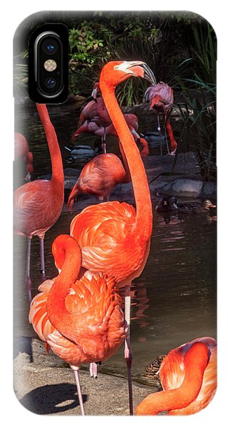 Greater Flamingo IPhone Case