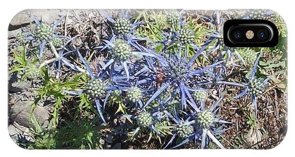 Greek Spiky Plant IPhone Case