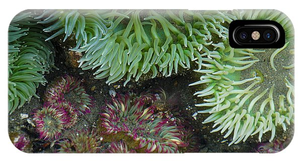 Green And Strawberry Anemonies IPhone Case