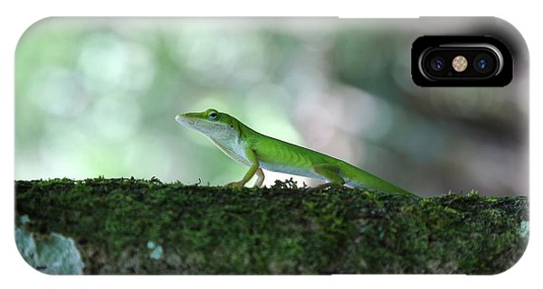 Green Anole Posing IPhone Case