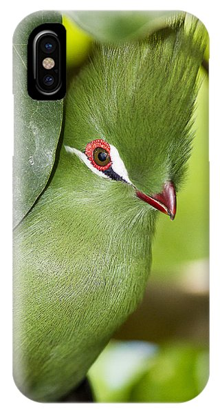 Green Turaco Bird Portrait IPhone Case